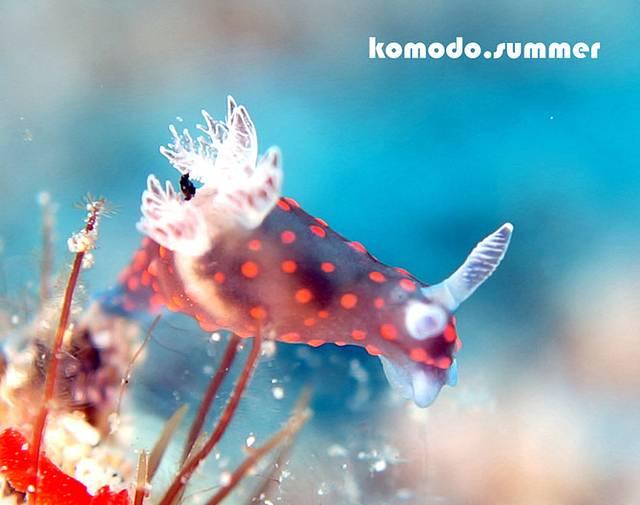冰冻海兔清洗步骤图片