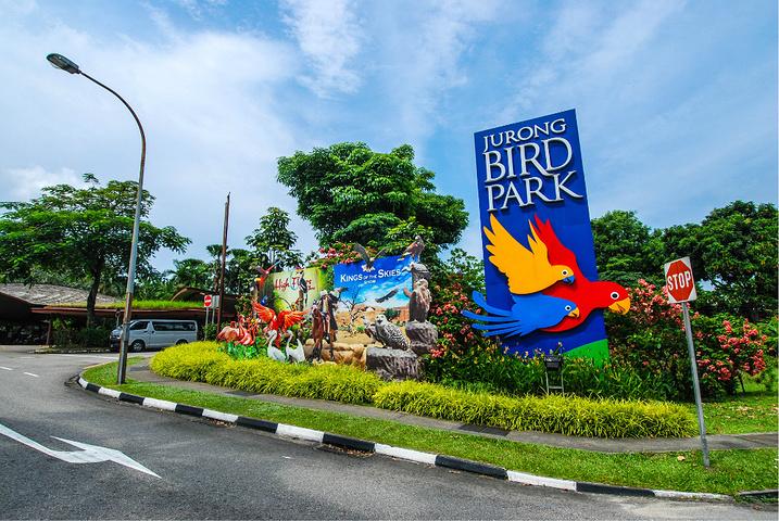 """新加坡 的裕廊飞禽园内建有95个鸟舍、10个活动场所和6个池塘,养有380多种飞鸟,约4600只,其中有29种受威胁鸟类。园内广泛搜罗了东南亚及世界各地的鸟类,有来自西班牙的红鹤、来自北京的知更 鸟、来自几内亚的食火鸡,来自巴西的三趾鸵鸟、有羽毛绚丽的热带鸟和来自冰天雪地的南极企鹅等,是个""""花木四时茂,人来鸟不惊""""的""""鸟类王国""""。园中修建有四通八达的柏油小径,不愿步行者也可选游览车。"""
