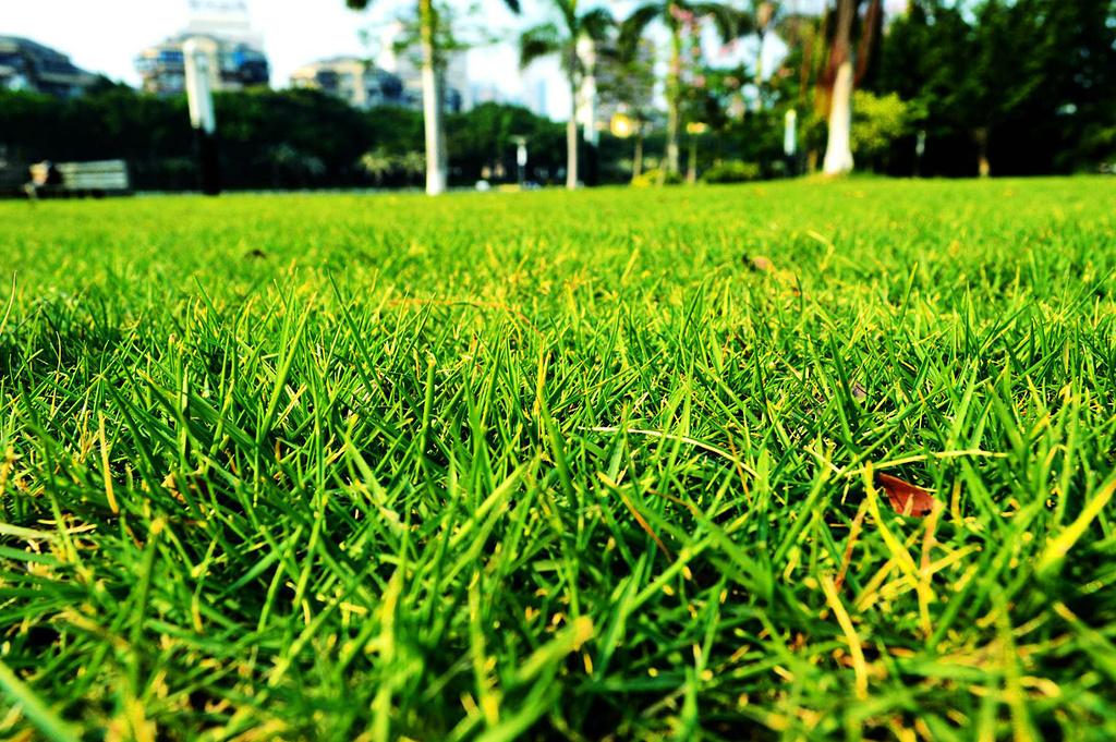 看着那茂密的棕桐树与绿油油的草坪