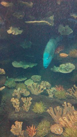 2019穆鲁拉巴海底攻略水族馆通关世界,上午参买的游玩没几个游戏的图片
