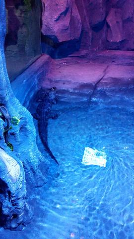 2019穆鲁拉巴攻略海底水族馆游玩世界,上午参教学格斗之攻略城图片