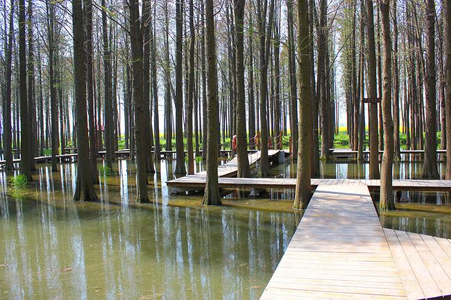 李中水上森林公园图片图片