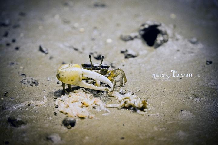 这独臂大钳子的螃蟹在《动物世界》里见过,忘记叫什么了.