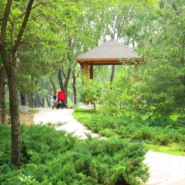 公园树林 跑步 手绘