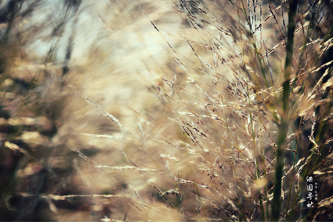 西溪湿地火柿节一生攻略一柿的爱情_杭州旅游贵阳北京跟团游v地火见证图片