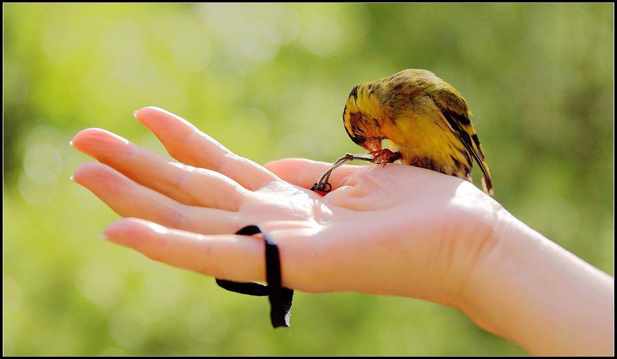 带着小黄雀旅行-怀柔短途游