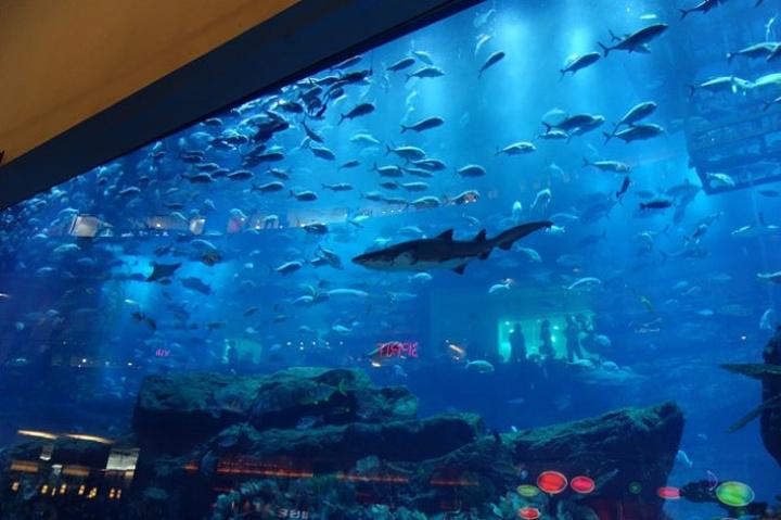 迪拜水族馆&海底世界动物园