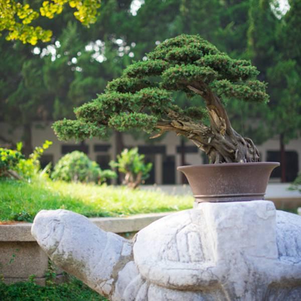 文庙里有四棵古银杏树,分别是连理杏,福杏,寿杏和三元杏,年龄最大的