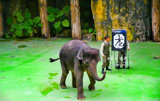 为了筹集野生动物保护基金