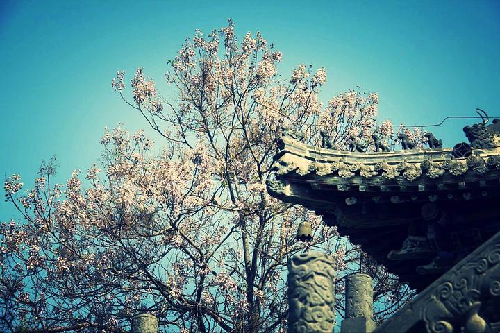 又见喇叭花树