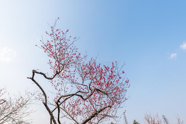 梅花山景区图片