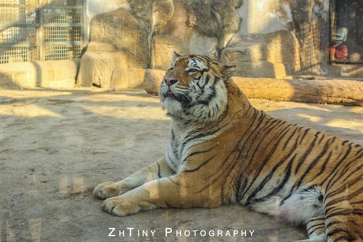 """就搬到章丘,现在叫野生动物园,门票超贵_济南动物园""""的评论图片"""