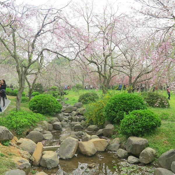 樱花园旅游攻略