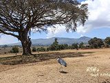肯尼亚旅游景点攻略图片