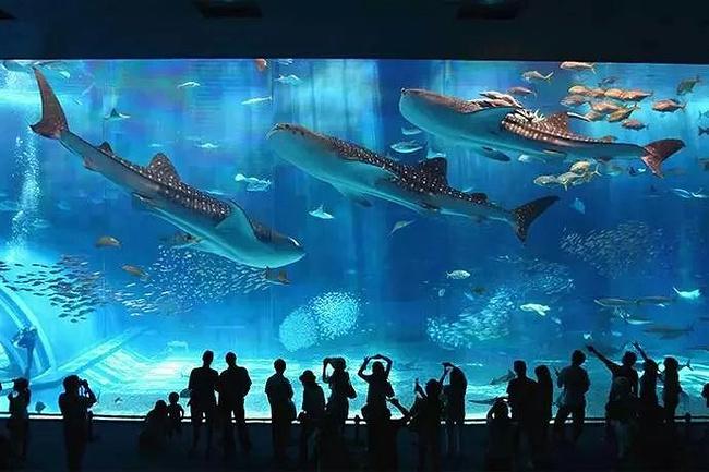 冲绳美之海水族馆图片