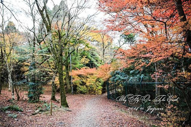 内拥有京都最古老的木结构建筑——五重塔