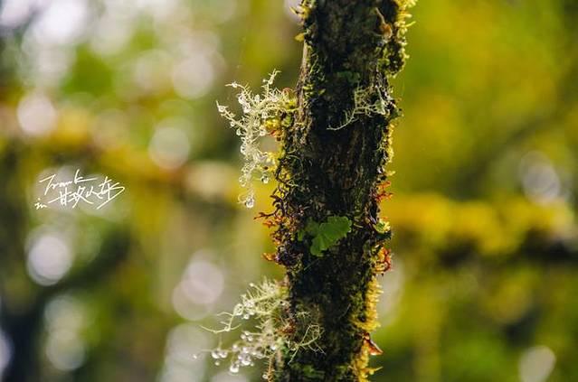 树上挂满了分不清是露珠还是冰晶