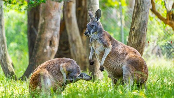 """""""这是阿德莱德附近我最喜欢的地方_克莱兰德野生动物园""""的评论图片"""