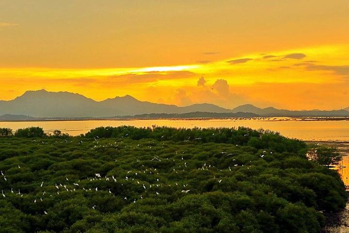 红树林与碧海,蓝天,白鹤构成一幅静谧,祥.