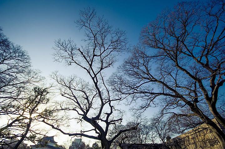 樱花树,冬季的时候都是枯枝