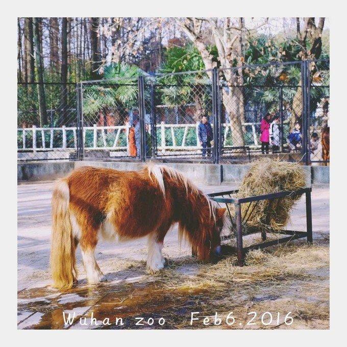 武汉动物园图片