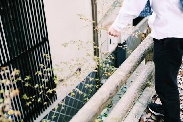 面朝高中,乘日韩看彼岸的春暖花开--邮轮省邵阳重点大海图片