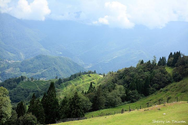 只好打车上山. 山上风景很美,有一种踩在云端的感觉.