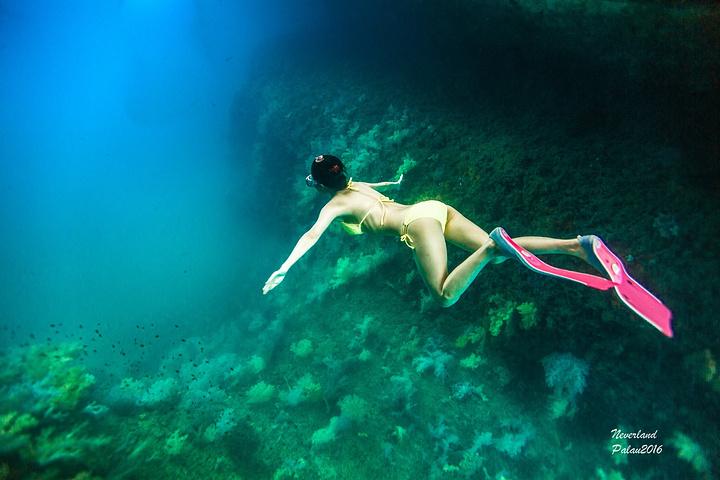 壁纸 海底 海底世界 海洋馆 水族馆 桌面 720_480