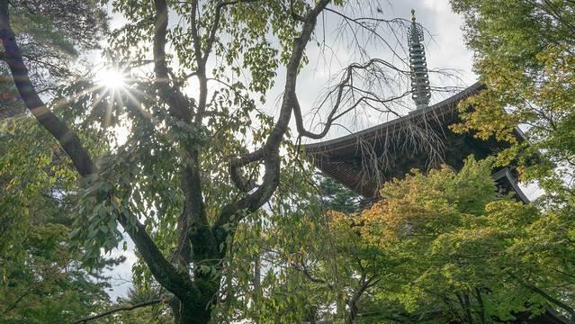 古代竹子雕刻家观音