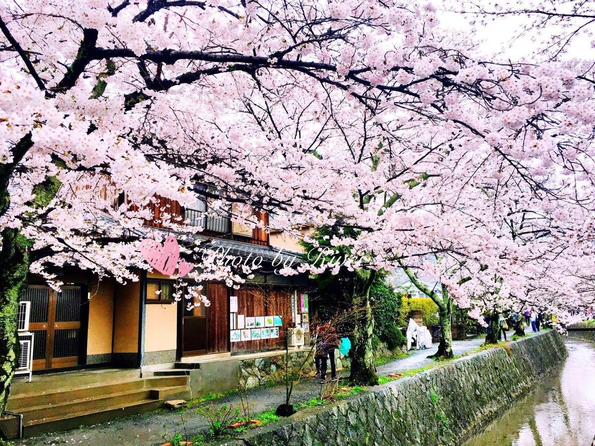 再赴一场粉红色的约会京都、奈良、大阪(网罗关西赏樱名所+各类美食+和服旅拍)