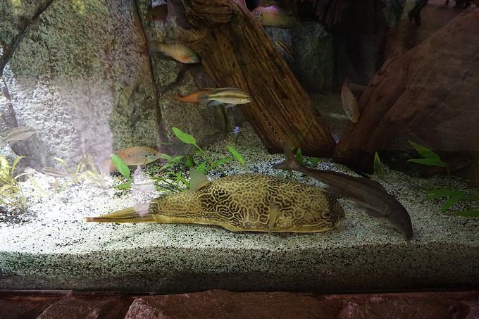 河川动物园图片