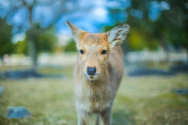 梦到鹿生小鹿怎么回事