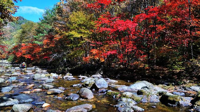 蒲石河森林公园图片图片