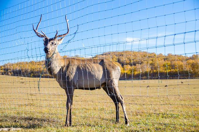 乌兰布统野生动物园图片