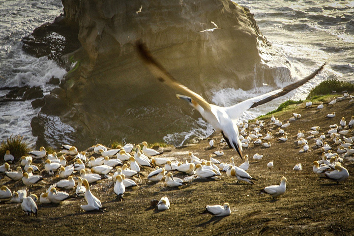 田园牧歌的生活,依山傍水的美丽小镇,刺激的户外运动,可爱的动物和