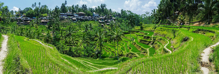 水稻田是巴厘岛最常见的地貌,而田间的耕作也是巴厘传统生活最重要的一环。回到巴厘之前,我们还途经了德格拉朗Tegalalang。这里位于峡谷之间的梯田虽然面积不大,但却也有层次。德格拉朗距离乌布仅仅6公里,也可以算是巴厘上,与大城镇最接近的梯田了。