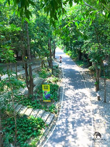 我们选择的泰山飞跃在清迈动物园,具体坐标:清迈大学附近——坐在大巴