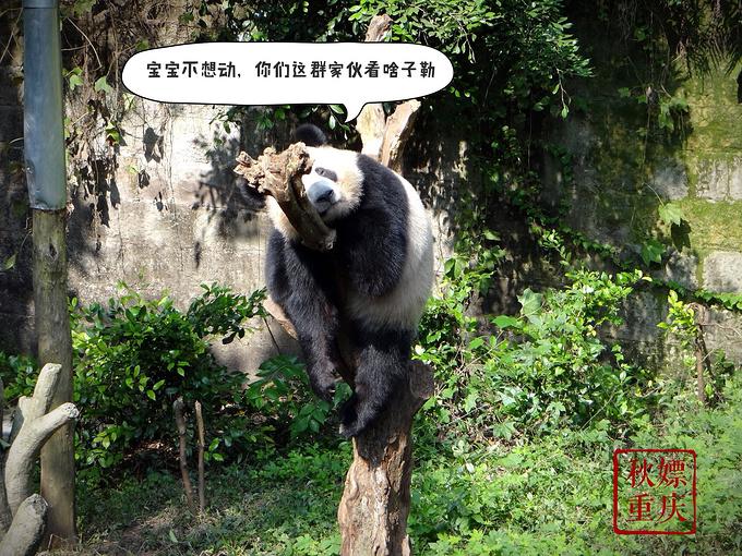 重庆动物园图片