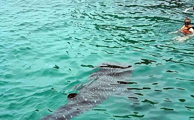 遇到了一只很可爱的鲨鲸