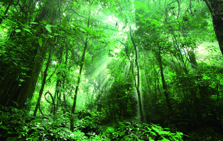 仙境_勐远仙境 旅游日,像徐霞客一样去雨林旅行