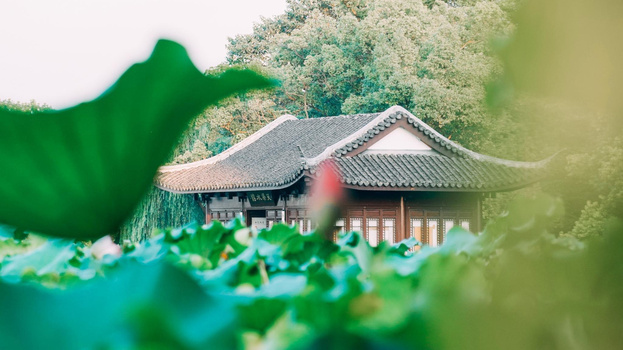 仲夏三日在水一方杭州杭州湿地-杭州旅游攻略西溪两日游玩住宿攻略图片