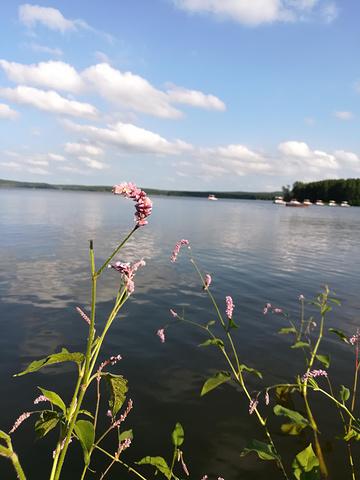 水边的可爱小花.