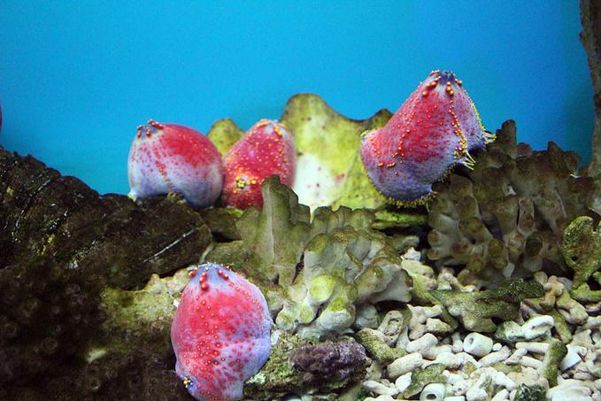 鸽子窝公园水生动物展览图片