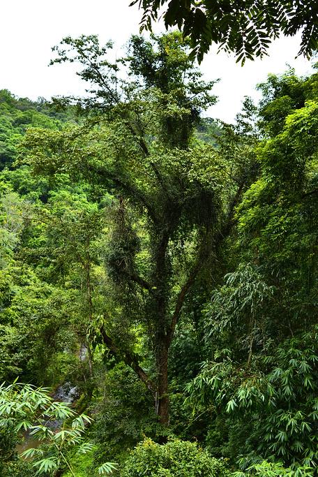 欧式复古手绘雨林动物猕猴老虎鹦鹉壁画
