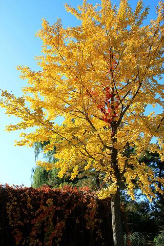春天可以赏花,柳叶;夏天有荷花,秋天有银杏树,冬天有雪景,可以说一年