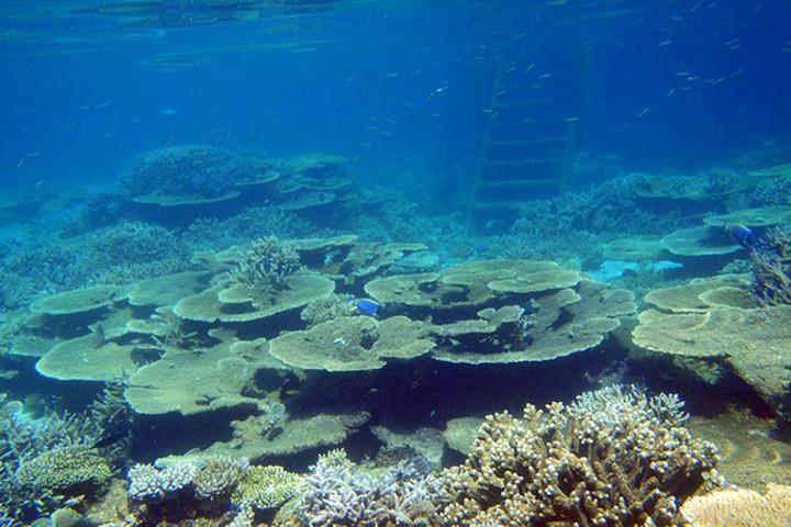 当然,有许多珊瑚群是跟水屋相伴的,您下海时既要注意自己的安全,也要