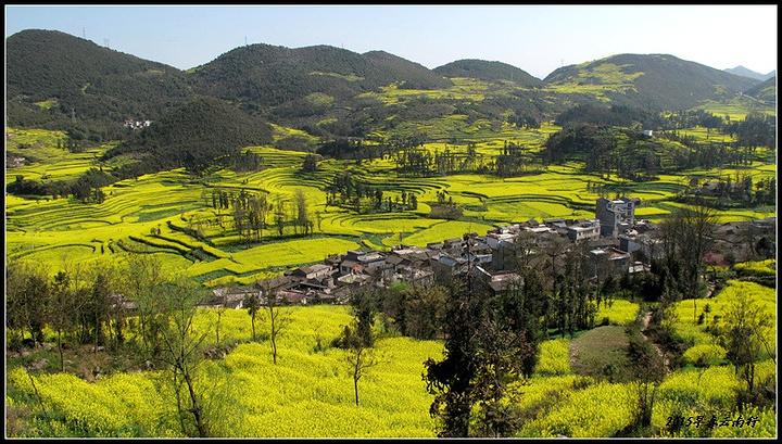 是拍摄油菜花最好的地方,到达金鸡岭需要步行二十几分钟爬上一个小山