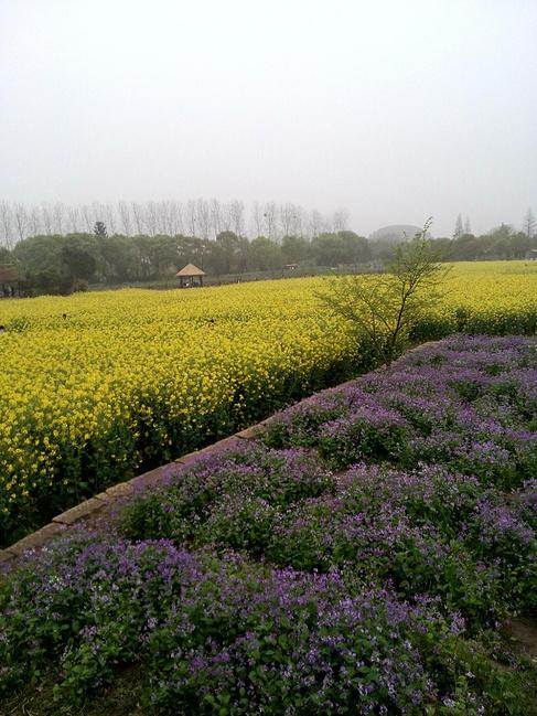 天烟雨等攻略-游西塘乌镇杭州西湖_嘉兴旅游矿石的镇青色们伙伴图片