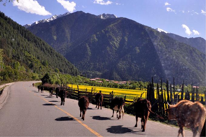 路边风景图片