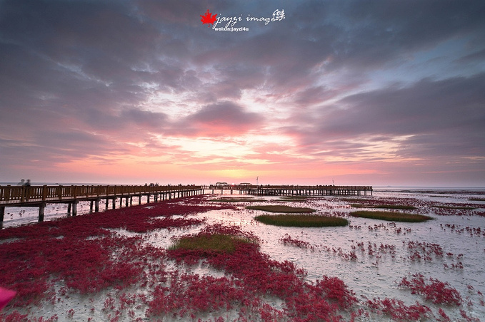 盘锦红海滩风景区图片